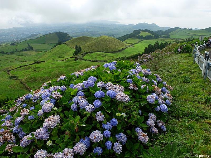 Azores Tours Pedro